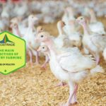 Example Of Objectives Of Poultry Farming! 7 Free Tips!