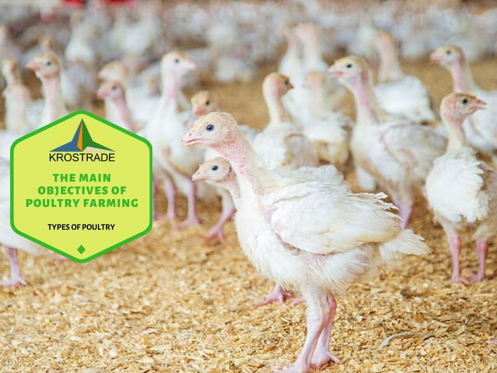 Importance of poultry farming