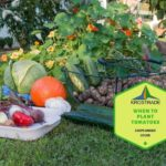 Example Of 8 Best Vegetables to Grow in Exeter, UK! Video Download!