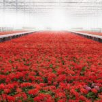 What Color Light Would Be The Best For Growing Plants In A Polytunnel