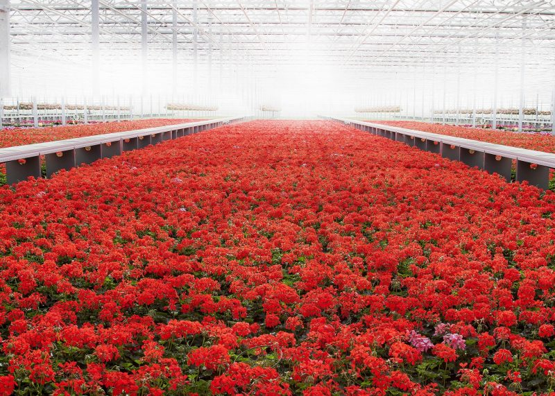 What Color Light Would Be The Best For Growing Plants In A Greenhouse