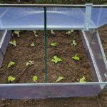 What Do Mini Polytunnels Need to be Successful? 8 Proven Factors!