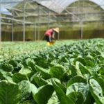 What Is The Best Growing Temperature For Vegetables In A Polytunnel? 4 Season Giveaways!