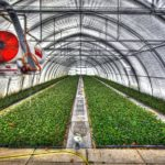 What Is The Hardiness Zone In Polytunnel Growing? 2 Bonus Tips!