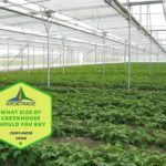 Example Of What Size Of Polytunnel Should I Buy? Video Download!