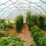 What Temperature To Start Planting In A Polytunnel? 2 Special Tips!