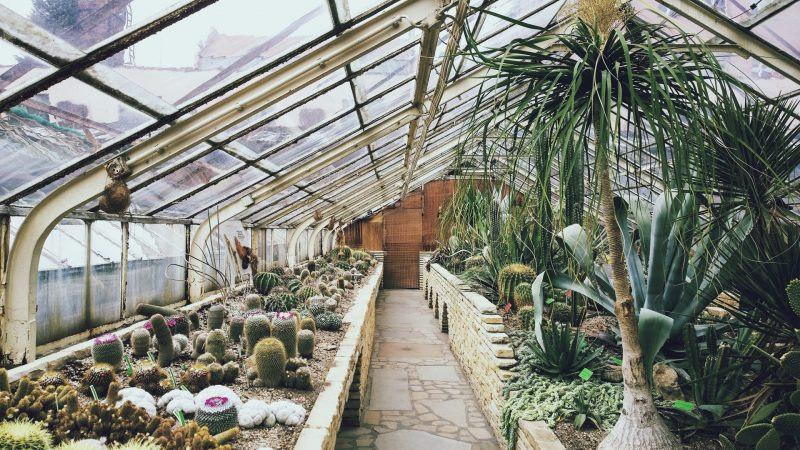 What Temperature is Too Hot for a Greenhouse