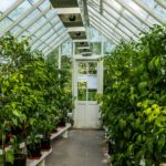 What To Know When Growing In A Polytunnel? 5 Special Factors!