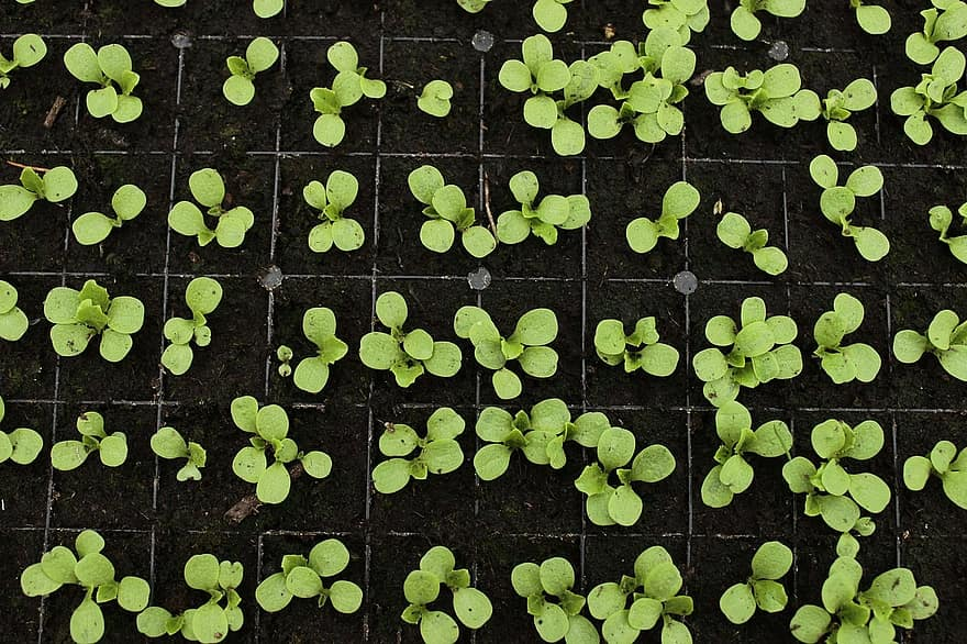 When Is It Safe To Start Growing Seeds In Greenhouse