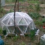 When Should You Plant in a Mini Polytunnel? The Plants Explained!
