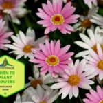 When To Plant Flowers in the UK? Explainer for Beginners!