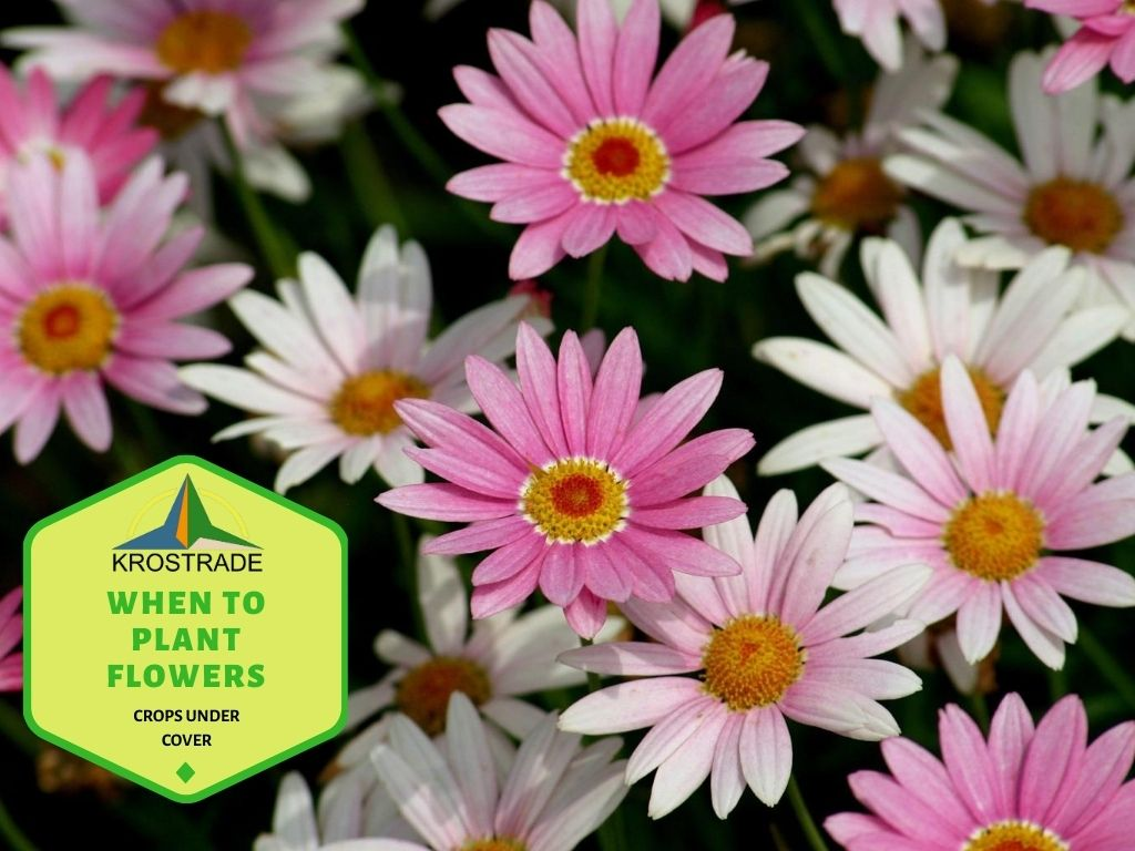 What Are The Key Planting Times For Seasonal Flowers