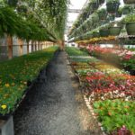 When To Start Flower Seeds In A Polytunnel For Spring Planting? Pros and Cons!