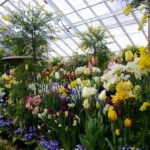 When To Start  Planting Flowers For Beginners In A Polytunnel In South Wales? 4 Special Plants Explained!