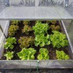 When To Start Portable Polytunnel Planting? 4 Bonus Tips!