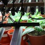 When To Use A Growing Light In A Polytunnel? 2 Proved Advice!