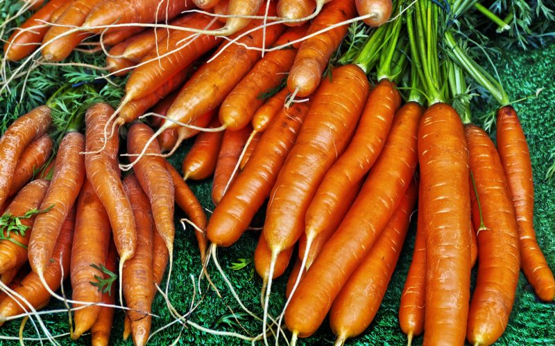 When to Plant Carrots in Colorado