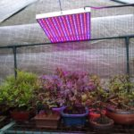 Which Gives Better Light For Growing Plants In A Polytunnel Fluorescent Or LED? 6 Free Tips!
