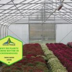 Why Do Plants Grow Better In Polytunnels? 4 Good Reasons!
