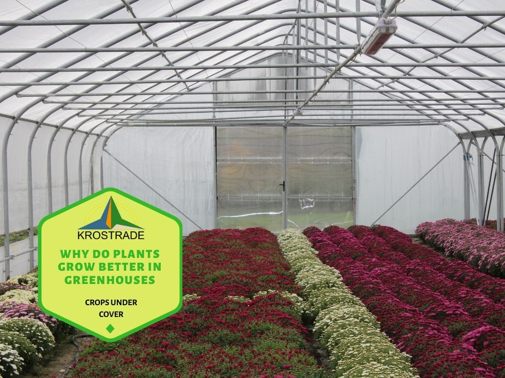 The Benefits of a Greenhouse