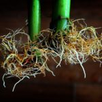 How To Fix Root Rot Hydroponics? 6 Special Steps!