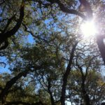 How To Grow Trees Faster? 8 Bonus Tips!