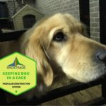 Example Of Keeping a Dog in a Cage All Day! 5 Easy Steps!