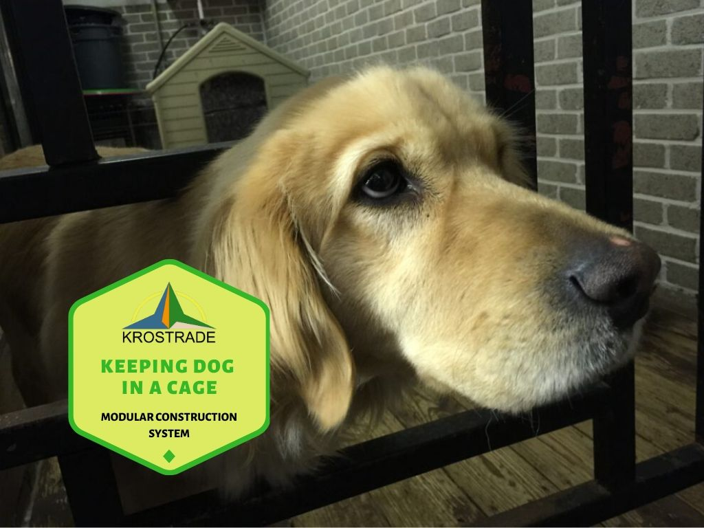 What You Need to Know About Keeping a Dog in a Cage All Day