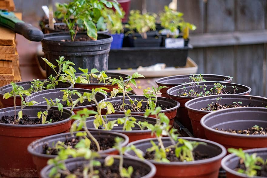 what helps greenhouse plants stay small