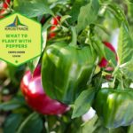 What to Plant with Peppers   Pepper Planting 101