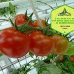 Why Do Tomatoes Grow Better In Polytunnels? 3 Bonus Tips!