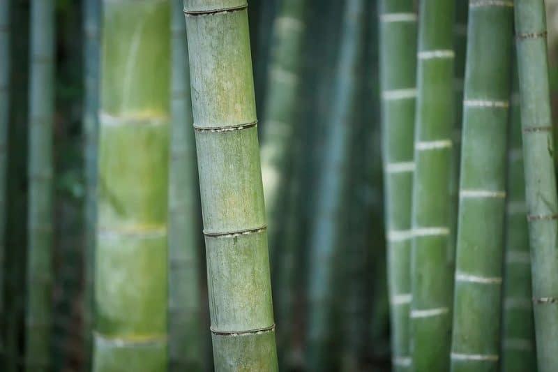 What Is A Bamboo Mattress