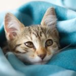 How To Make A Fleece Blanket Soft Again Today?