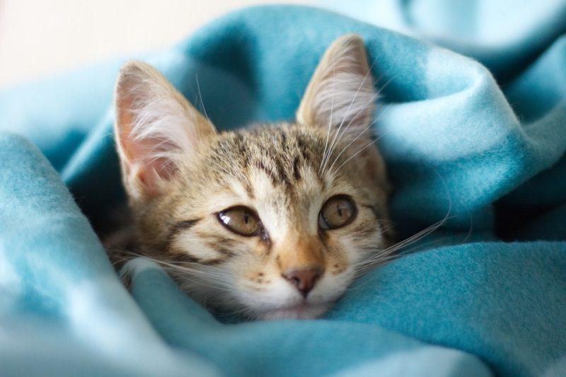 How To Make A Fleece Blanket Soft Again
