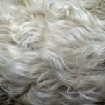 New Guide Of How To Get Dog Hair Out Of A Blanket? 3 Efficient Tips!
