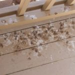 Free Guide Of How To Remove Mildew From Shower Curtains In 4 New Ways!